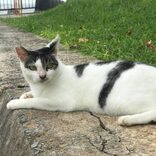 藤代冥砂 小説「はじまりの痕」 #32 貴様も猫である