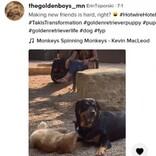 公園のボス犬とどうしても仲良くなりたい子犬 必死のアプローチが可愛すぎ(米)<動画あり>