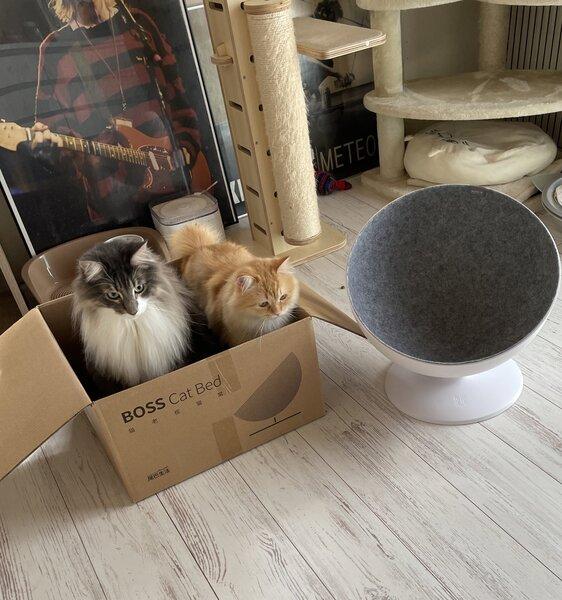 ダンボール箱に納まる猫たち