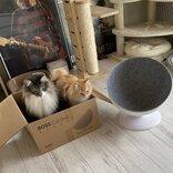 違う、そうじゃない… 箱が気に入った兄妹猫、仲良く納まりドヤ顔 7980円の高級ダンボールと化す「結局勝てない」