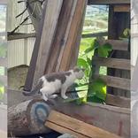 警戒心マックスだった野良猫 その後の展開に「笑った」「マジ神」