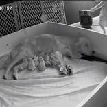 犬が育児をしているところに、1人の子供がやってきて? その後の姿に「幸せを垣間見た」