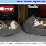 犬用ベッドを独占する欲深ネコと譲る犬 優しい犬にはつらい過去が(英)