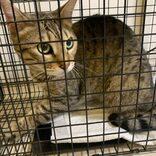 迷子猫探しをオンラインで相談 効果的な捜索戦略を定め、チラシ作成も