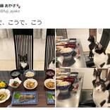 お行儀良すぎでは……!? 食卓に座る兄妹猫の写真に25万超いいね 「お箸使いだしそう」