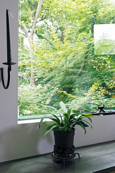 2階の窓から見える庭