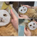 猫にパックをさせてみたらシュールでかわいすぎた「完全にメンフクロウ」「リアルカオナシ」「吉田戦車の漫画に出てきそう」