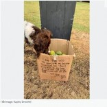 散歩中に見つけた老犬からのプレゼント 温かいメッセージが飼い主同士の交流へ(英)