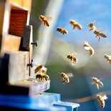 【思考をキレイにする旅の仕方(284)】「ミツバチの旅」をご存知ですか?