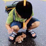 """ちっちゃい野良猫の""""10年後の姿""""にビックリ!親はライオンかな?"""