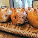 うさぎ大好き店主のこだわりパンが話題 「小学校で飼育員をやってからずっと好き」