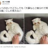 照れてる猫?ほっぺの茶色い毛がチャームポイントの猫さん