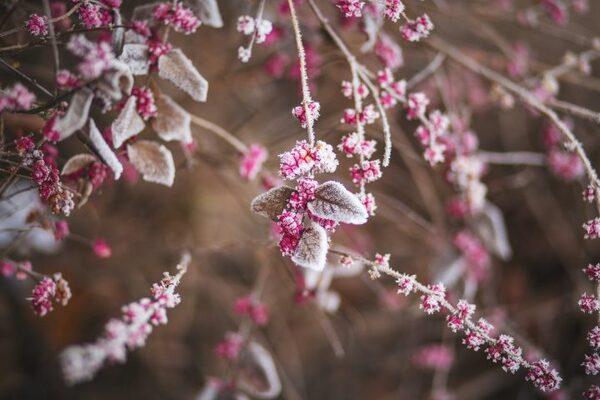 冬の美しい言葉《植物》