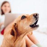 夢占い|犬の夢の意味、夢の中で犬が吠えたら何を暗示している?