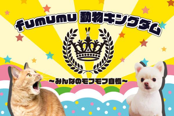 『fumumu動物キングダム~みんなのモフモフ自慢~』キャッチ