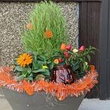秋にぴったりの「寄せ植え」を玄関に。4苗だけ、予算1000円以内でこんなにはなやか