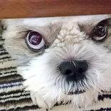 おやつが欲しい犬 だんだんと悪い顔になっていく過程に腹筋崩壊