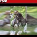"""クマの銅像に恋した野生のクマ """"実らぬ恋""""に「早く本物の相手が見つかるといいね」(米)<動画あり>"""
