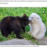 それぞれ苦境を乗り越えた白と黒の子グマ 動物園で出会い大親友に(米)<動画あり>