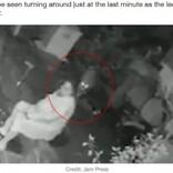 自宅前でヒョウに襲われた55歳女性、杖で猛反撃し命拾い(印)<動画あり>