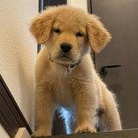 階段上にいた子犬 半年後に同じ場所で撮ってみたら?
