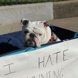 マラソンランナーを応援する犬 人々が爆笑したワケは? 「その気持ち分かる」