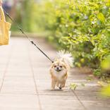 ペット禁止の管理規約があるマンション。隠れて飼っているのがバレたらどうなる?