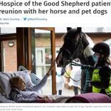 余命僅かの女性が願った最後の面会 愛馬の姿を見て笑顔に(英)