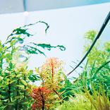 静かなブーム、奥深き水草の世界へようこそ!「東京オアシス」水景工房を訪問