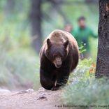 国立公園の「クマに近づくな」注意を無視し夢中で撮影 20代女に実刑判決