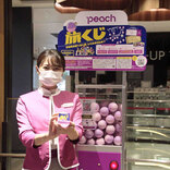5000円で沖縄、石垣、札幌など航空券が当たる。LCCピーチの「旅くじ」は予想以上に熱かった