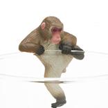 コップのフチで親猿&子猿が大暴れ!カプセルトイ「PUTITTO ニホンザル」発売