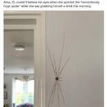 """壁に約18センチもの""""クモ""""を見つけた女性、痒みを伴うも後に無害の別の生物と判明(英)"""