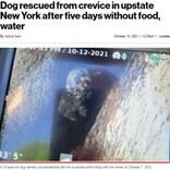 岩の割れ目から12m下に落ちた犬、5日ぶりにソーセージで救出!(米)