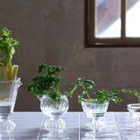 捨てちゃう野菜の根やヘタが観葉植物に?おすすめ再生野菜8選