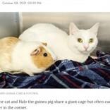 猫とモルモットの間に生まれた強い絆 新たな飼い主に引き取られ一緒に過ごすことに(米)<動画あり>