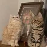 なぜか上を向いて固まる猫 次の瞬間?「かわいすぎる」「笑ってしまった」