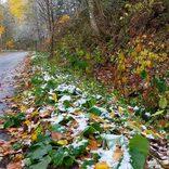 北海道内3ヶ所で今年の初雪を観測 気温0℃に道民は「しばれる」