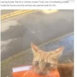 """自宅前に放置されたペットフードの袋は愛猫の仕業 地元でも有名な""""泥棒猫""""だった(英)<動画あり>"""