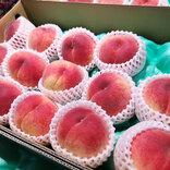 「食べたいけど面倒!」JA全農あおもりが教える『桃をおいしく食べるコツ』