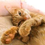 気性が荒い保護猫ちゃん…家に来た翌日、まさかの姿にビックリ!