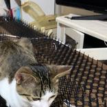 見よ、これが猫除けマットの力だ! 写真に「強すぎる」「あるある!」