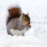 雪に関連する言葉はこんなにもおしゃれで美しい。その意味も合わせて知りたい表現