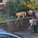 子犬の散歩中に猫と遭遇して、愛犬を抱き上げた男性 その理由ににっこり