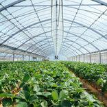 「持続可能な食料生産・地域」目指すアクションを学生が発表 JA全中・東農大・共同通信が「SDGs国消国産の日」シンポジウム