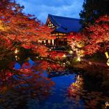 【京都】通常非公開の書院や庭園が公開「くろ谷 金戒光明寺」秋の特別拝観